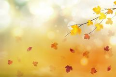 Autumn abstract background. Autumn falling red, yellow, orange, brown leaves on bright background. Vector autumnal. Foliage fall of maple leaves. Design concept stock illustration
