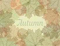 Autumn abstract background. Stock Photos