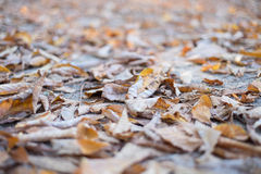 Autumn abstract background Stock Photo