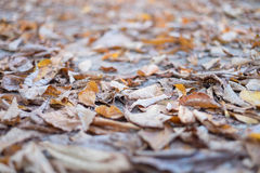 Autumn abstract background Royalty Free Stock Photography
