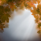 Autumn abstract background Stock Photos