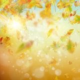 Autumn abstract background. EPS 10 vector. Autumn abstract background. Smooth light warm sun template. And also includes EPS 10 vector Royalty Free Stock Images