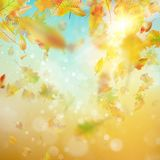 Autumn abstract background. EPS 10 vector. Autumn abstract background. Smooth light warm sun template. And also includes EPS 10 vector Stock Images