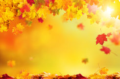Free Autumn Abstract Background With Falling Leaves Royalty Free Stock Photo - 79840055