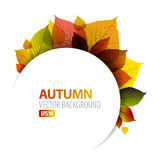 Autumn abstract floral background vector illustration