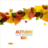Autumn abstract floral background Stock Photography