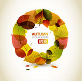 Autumn abstract floral background Stock Image