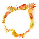 Autumn abstract floral background. with copyspace. Royalty Free Stock Photos