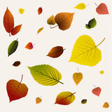 Autumn abstract floral background pattern Royalty Free Stock Photos