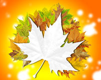 Autumn abstract floral background with place for your text Royalty Free Stock Photos