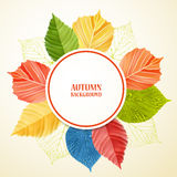 Autumn abstract floral background with place for your text Stock Photography