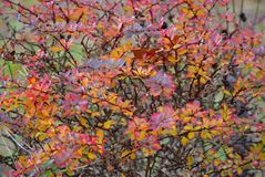 Autumn Abstract gekleurd art. stock afbeelding