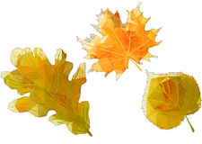 Autumn abstract leaves Stock Images