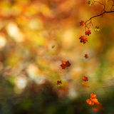Autumn, abstract natural background Royalty Free Stock Images