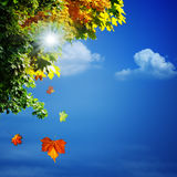 Autumn, abstract natural backgrounds Royalty Free Stock Photo