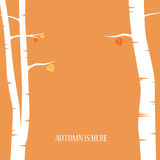 Autumn abstract vector background. Birch trees Royalty Free Stock Photography