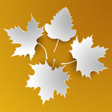 Autumn abstract white leaves Royalty Free Stock Image