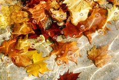 Autumn abstraction Royalty Free Stock Photography