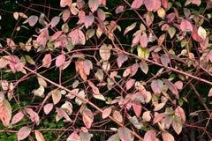 Autumn Abstraction vermelho foto de stock royalty free