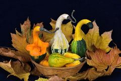 The autumn abundance.  Royalty Free Stock Photography