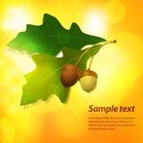 Autumn acorn background Stock Image