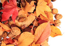 Autumn acorn and other autumn souvenirs Stock Photography