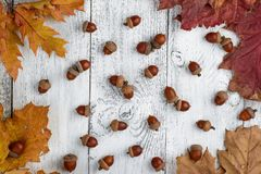 Autumn and acorns on wooden background. Autumn fruit of acorn on wooden retro table in white colours Royalty Free Stock Photo