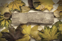 Autumn ad with wooden sign for words and inscriptions and beauti Stock Images