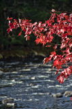 Autumn Adirondack Lake Water Reflections nessun 13 Immagine Stock Libera da Diritti