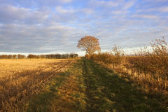 Autumn afternoon. A country bridleway on an autumn afternoon with an ash tree and hawthorn hedgerow near a straw stubble field in golden sunlight in a yorkshire Stock Images