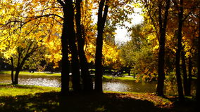 Autumn afternoon in the park.Trees with golden leaves in October wind,sound. stock video footage