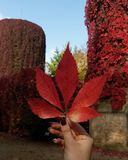 Autumn again stock photos