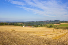 Autumn agricultural landscape. Agricultural landscape in autumn with golden stubble fields in amongst trees and hedgerows under a blue sky in the yorkshire wolds Stock Photography