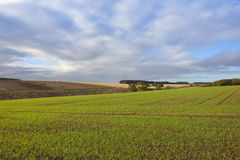 Autumn agriculture with big sky Stock Photo