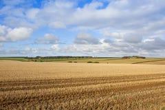 Autumn agriculture Stock Photos