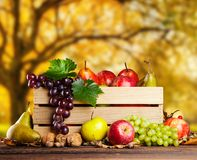 Autumn agriculture products on wood Royalty Free Stock Photography