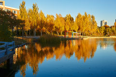 The autumn alamo lakeside Stock Images