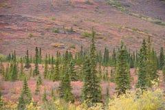 Autumn alaska Royalty Free Stock Photography