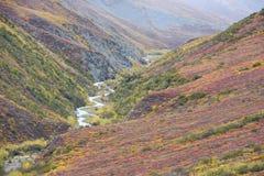Autumn alaska Stock Image
