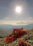 Autumn. Aleyut smoke tree nature of the world sheets of decorating Royalty Free Stock Photos