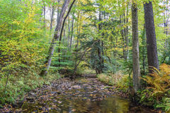Autumn in the Allegheny Mountains Royalty Free Stock Photo