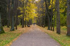 Autumn Alley Royalty-vrije Stock Afbeelding