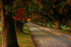 Autumn alley. An alley with cobblestone pavement in an early autumn morning light Royalty Free Stock Photography