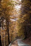 Autumn alley. A autumn alley in a forest Stock Photos