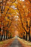 Autumn alley. With yellow leaves Stock Images