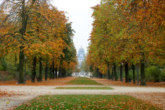 Autumn alley. Tree Alley in front of The Law Courts of Brussels Stock Photos