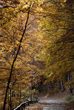 Autumn alley. A autumn alley in a forest Royalty Free Stock Images