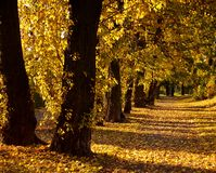 Free Autumn Alley Royalty Free Stock Photo - 1387295