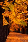 Autumn alley. Photo of an autumn alley in the countryside Royalty Free Stock Images