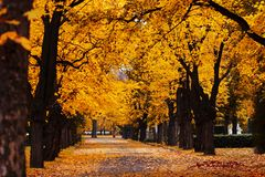 Autumn alley. Photo of an autumn alley in the countryside Stock Image